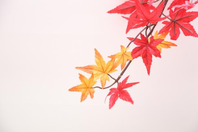 京都の紅葉、子連れで行くならどこ?~ベビーカーから小学生まで~