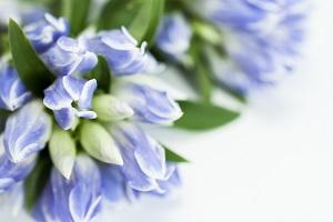 おばあちゃんにプレゼントの花。どんなのが良い?プリザードフラワーを敬老の日にスイーツと一緒に届けに行こう。